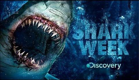 Discovery Shark copy